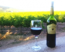 Red wine in glass and bottle with vineyards in the back ground
